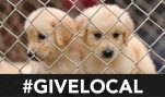 This #GivingTuesday, Support Your Local Pet Shelter, not HSUS