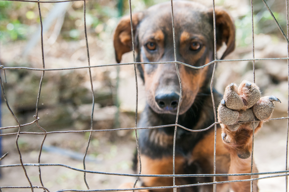 Image of: Puppy The Humane Society Of The United States Like An Unfortunate Number Of Large Bloated Charities Wastes Lot Of Money That Could Be Used For Good Hawaiian Humane Society The humane Society Of The Us Hardly Cares For Any Animals In
