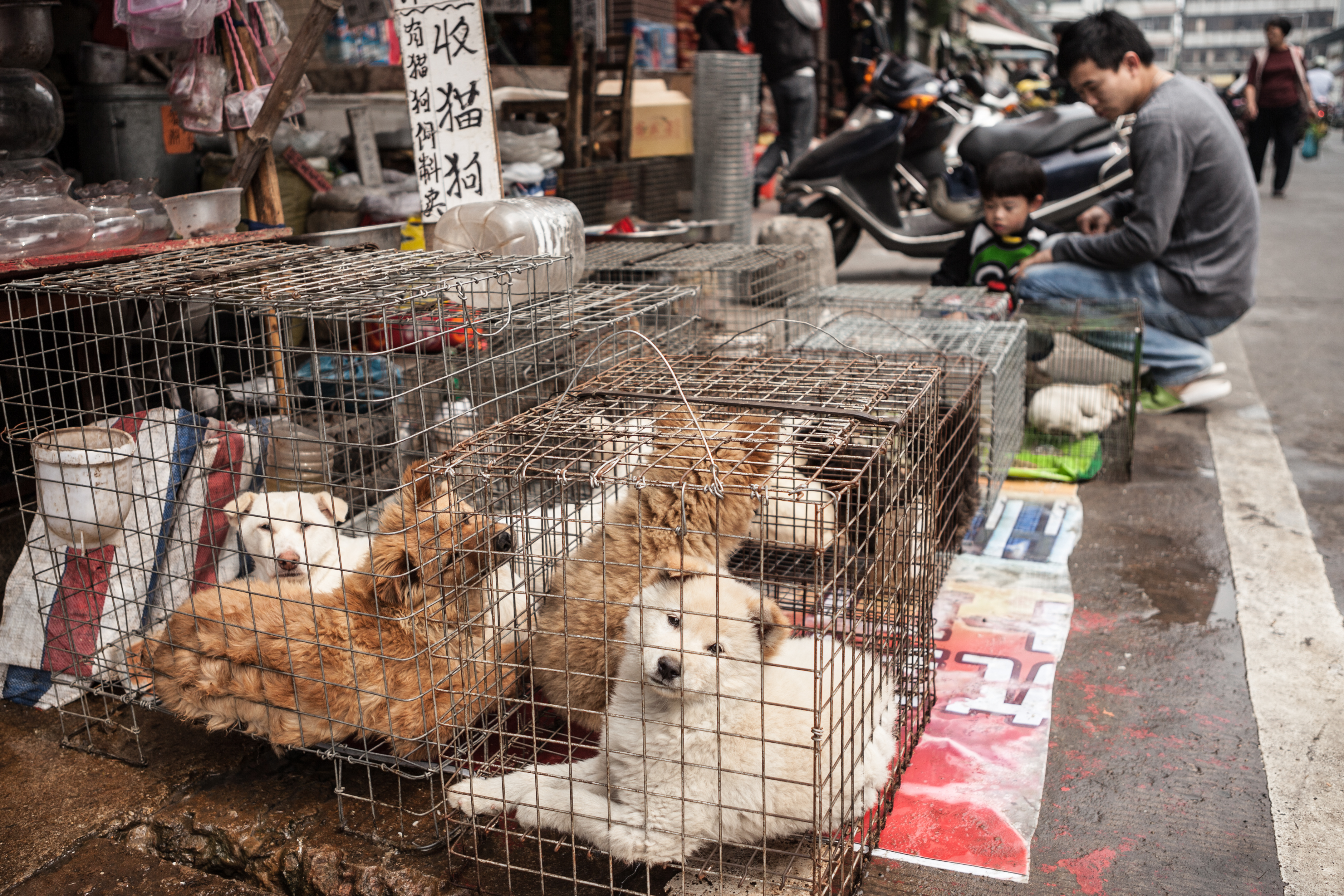 Did HSUS Let Dogs Suffer in China? - HumaneWatch - photo#28