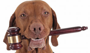 Bad Dog! Court Strikes Down HSUS Ballot Measure