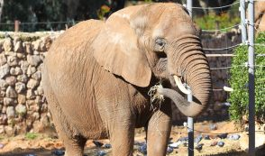 "Animal Lawyers Sue Bronx Zoo to ""Liberate"" Elephant"