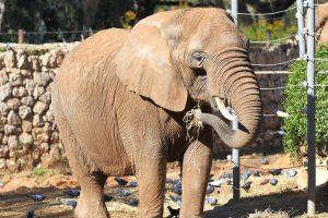 "Animal Lawyers Sue Bronx Zoo to ""Liberate"" Elephant"