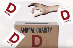 """NEW AD: Humane Society of the U.S. Gets a """"D"""""""