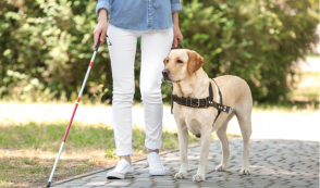 Humaniacs, Part 4: Activist Slammed for Criticizing Guide Dogs