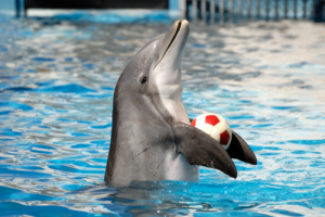 Humaniacs, Part 6: Activists Storm Dolphin Show, Ruin People's Day