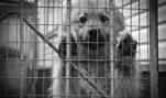 Not So Cute: Britain and California Restrict Sales of Dogs and Cats