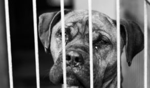 ASPCA Stonewalls Over 20 Dog Deaths