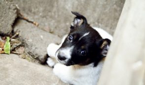 How Anti-Breeder Laws Contribute to Pet Trafficking