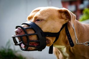 HSUS Lobbyist's Dog Kills Woman