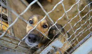 "UPDATE: HSUS Backs ""Rescue"" Group on Probation"